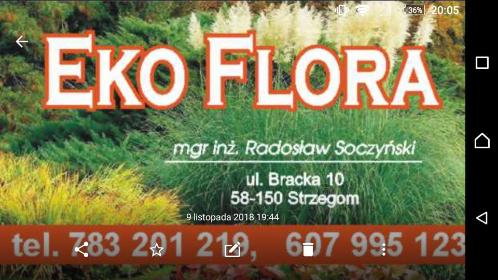 EkoFlora - Altany Strzegom