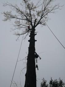 Drwalmar - Drewno kominkowe Bysina