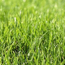 Przygotowanie trawnika do wiosny