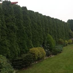 GREEN HAUSE - Ogrodnik Gdynia