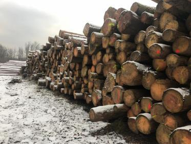 drzewohurt - Brukarstwo Tychy