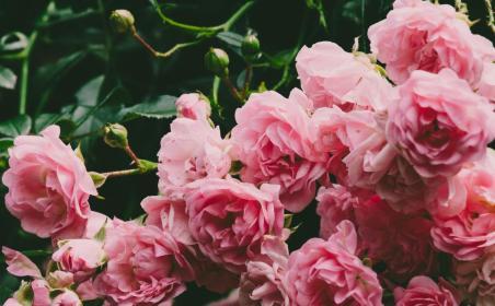 Sklep ogrodniczy Gardens4you - Hurtownia Nawozów Szczytniki
