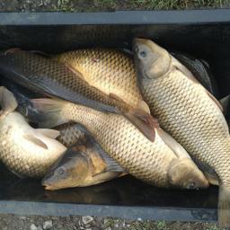 Gospodarstwo rybackie - Ryby Horyniec-Zdrój