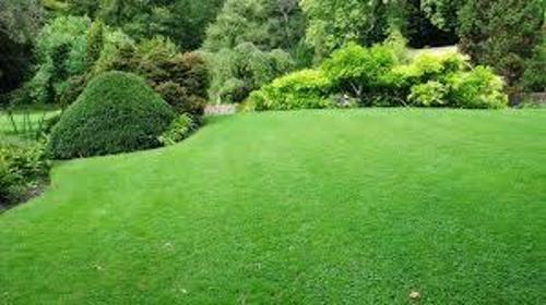 N&S GARDEN SERVICE - Projektowanie ogrodów Bucze