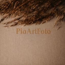 PioArtFoto Fotografia Åšlubna i okolicznoÅ›ciowa - Fotografowanie Zagroda