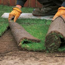zakładanie trawników z rolki i z siewu