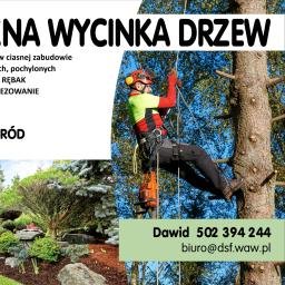 DS Factory pielęgnacja i wycinka drzew. - Firma Alpinistyczna Górzno