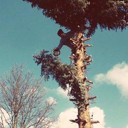 Alpinistyczna Wycinka Drzew-Krzysztof Drzyzga - Firma Brukarska Kłobuck