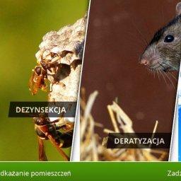 """Dezynfekcja dezynsekcja Deratyzacja """"Mobil"""" Maciej Zięba - Dezynsekcja i deratyzacja Szczecinek"""