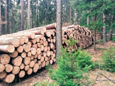 Usługi Leśne Wiktor Urbaniak - Prace działkowe Zelów