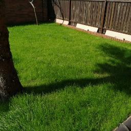 Trawnik 30 dni od siewu