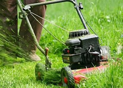 Twój Ogród - Ogrodnik Pniewy