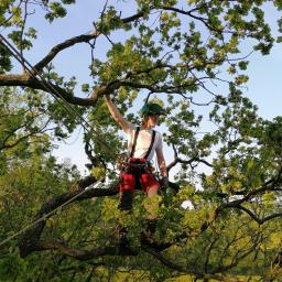 Arborysta Marcin Jackowski - Nawadnianie Ogrodów Wołów