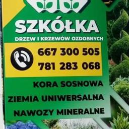 Szkółka Drzew i Krzewów Ozdobnych Gruszów Mały - Sadzonki Gruszów mały