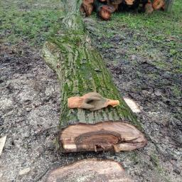 Drewno kominkowe Niedrzwica Duża 15