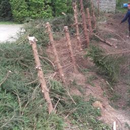 Wycnka drzew