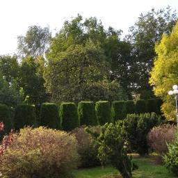 Wycinka drzew Mława