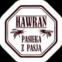 Hawran - pasieka i sklep internetowy - Miód Miłogoszcz