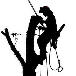 Jawor wycinka i pielęgnacja drzew - Altany Międzybrodzie Bialskie