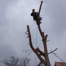 Wycinka drzew - Drewno kominkowe Kwidzyn