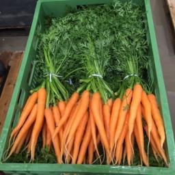 gosp.rolne - Warzywa Złotniki