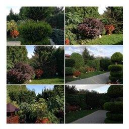 W Twoim Ogródeczku - aranżacje krajobrazu - Aranżacje Ogrodów Radom