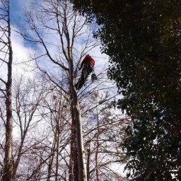 L'arbre - Odśnieżanie dachów Wołomin