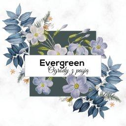 Evergreen Ogrody z pasją - Budowa Tarasu Drewnianego Łódź