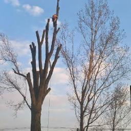 Malowanie dachów, wycinka drzew -MARLIN Usługi Wysokościowe - Prace wysokościowe Raciechowice